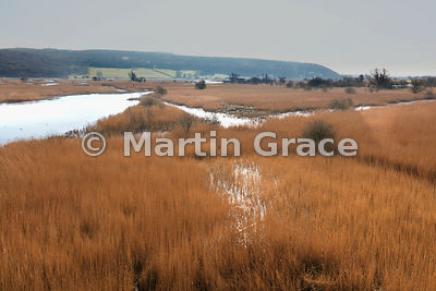 Leighton Moss nature reserve (RSPB) from the Skytower, February, Lancashire, England