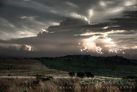 A typical highveld scene, cumulonimbus thunderclouds lit by low sunlight towering above two grass and bush covered fields divided by a road, three thorn trees in the middle distance.