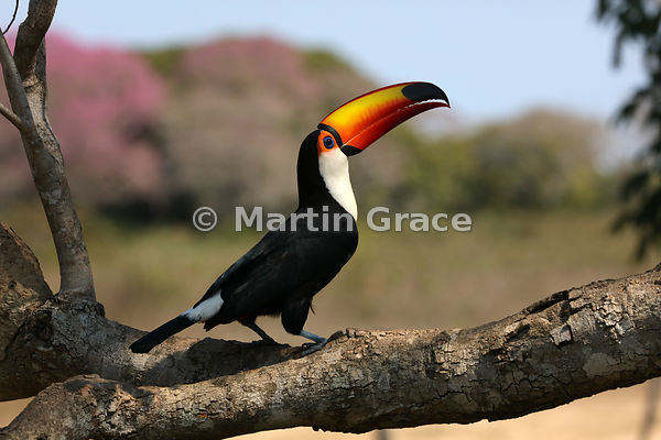 Stunning Pantanal Wildlife photos