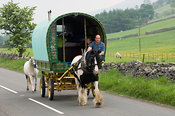Horse drawn caravan on the road, heading to the Appelby Horse Fair in Cumbria.