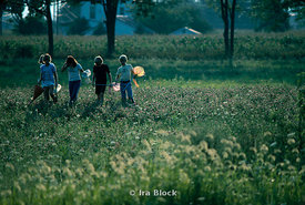 Children catch fireflies in a field at dusk.