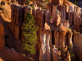 Bryce_Nation_Park_337