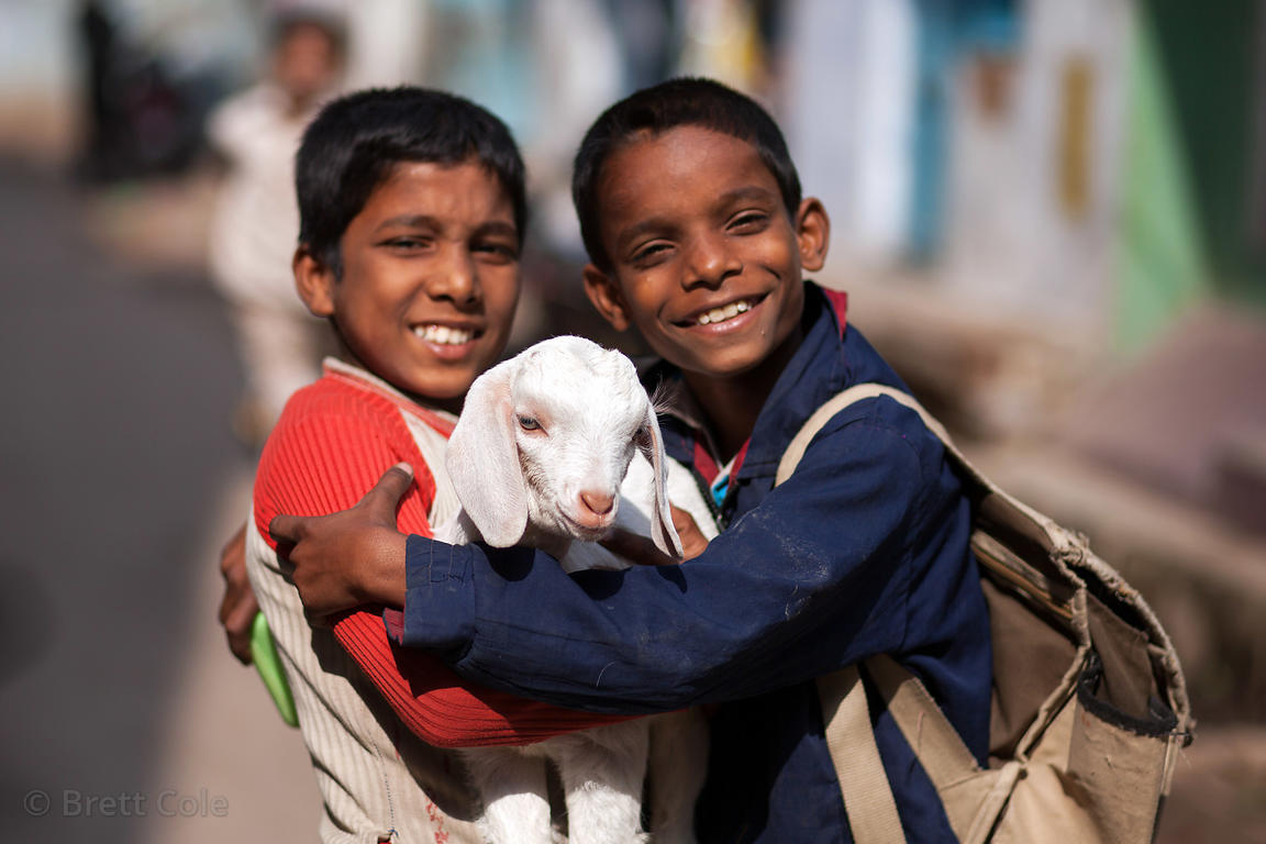 Two boys hold a white goat, Varanasi, India.