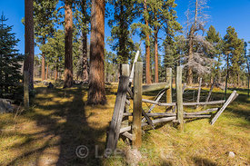 Pines and Fence in Valles Caldera National Preserve