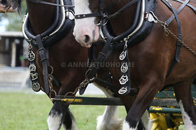 HOY_230314_clydesdales_3562