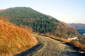 Forest road, Two Rivers Walk, Cwmcarn, Ebbw Valley, Gwent, South Wales.