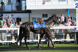 22nd August 2013 5.25pm Maiden Hurdle Race