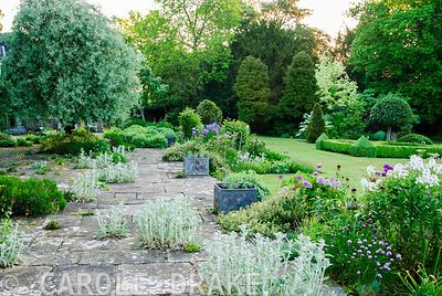 Stone terrace seeded with Alchemilla mollis and silvery stachys, with border of purples and whites and lawn beyond. Old Rectory, Pulham, Dorset, UK