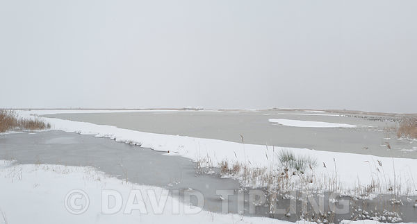 Ice covered scrape viewed from Bishop Hide on Cley NWT reserve North Norfolk February