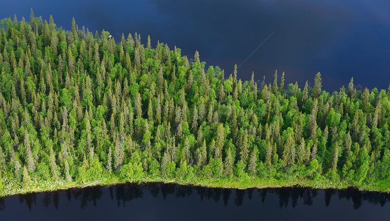 Aerial view taiga boreal forest surrounded by water, Sjaunja Bird Protection Area, Greater Laponia Rewilding Area, Lapland, Norrbotten, Sweden, June 2013.