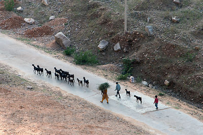 Aerial view of goat herders in Kharekhari village, Rajasthan, India