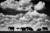 8393-Elephants_in_the_clouds_Kenya_2006_Laurent_Baheux
