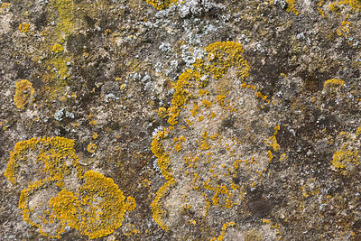Lichen growing on limestone