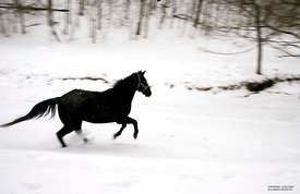 Cobalt runs in snow