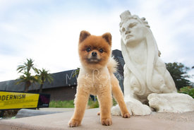 Proud Pomeranian Standing Next to Sphinx Statue