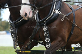 HOY_230314_clydesdales_3563