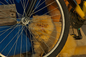 cat bicycle spokes