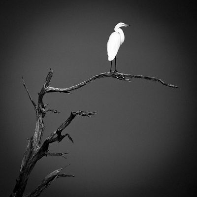 3892-Bird_Laurent_Baheux