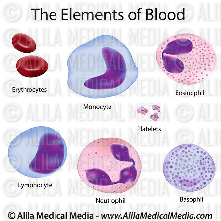 The cells of the blood