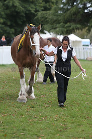 HOY_220314_Clydesdales_2348