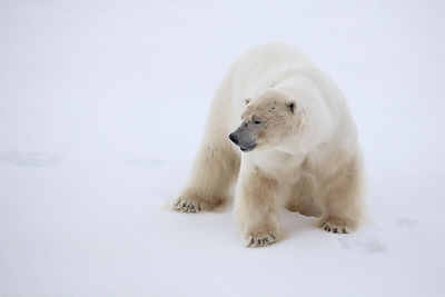 NORTH POLE and FRANZ JOSEF LAND photos