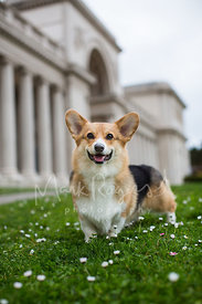 Smiling Dog Standing in Front of Building