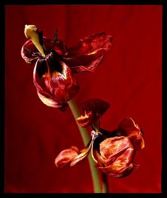 photo_nature_morte_moyen_format_studio_07