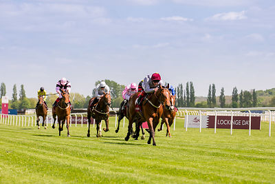Al Shaqab - Lockinge Day photos