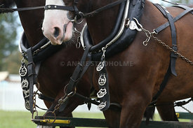 HOY_230314_clydesdales_3564