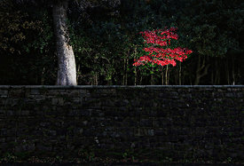 2010/11.Leaves in Pollok Park, Glasgow...Picture Copyright:.Iain McLean,.79 Earlspark Avenue,.Glasgow.G43 2HE.07901 604 365.pictures@iainmclean.com.www.iainmclean.com.All Rights Reserved.