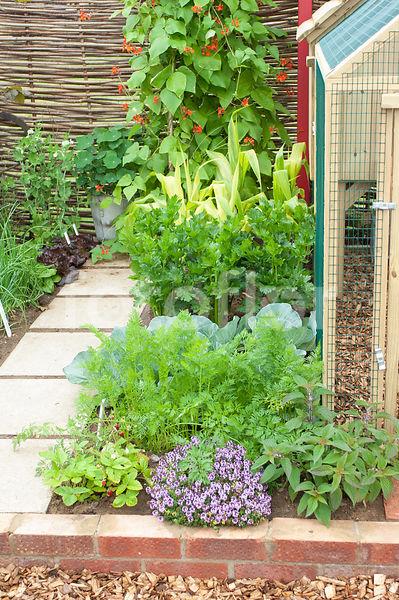 photo de petit jardin potager en carr cage poules fotoflor grand choix de belles photos