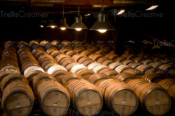 Looking across the tops of many barrels fermenting wine