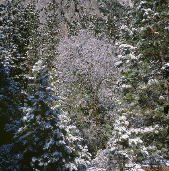 045-California_CA141079_Yosemite_Snow_Storm_015_Preview