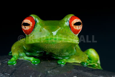 Frogs photos