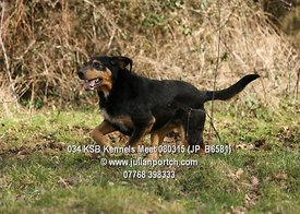2015-03-08 KSB Kennels Meet