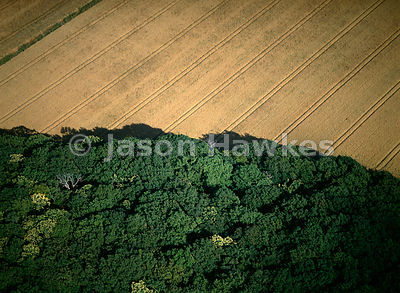 Woodland and fields, Gloucestershire