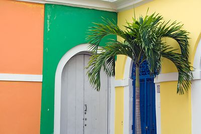 Palm and Door
