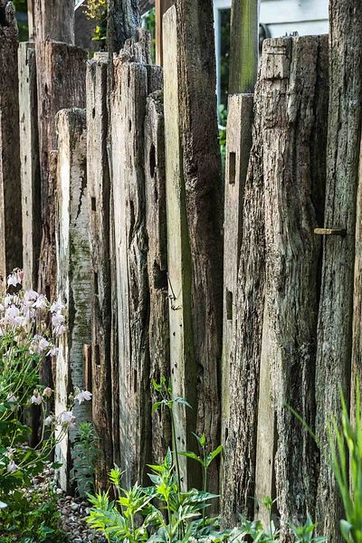 Fence made of reclaimed timber and driftwood in the nursery. King John's Nursery, Etchingham, East Sussex, UK