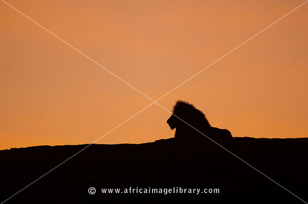 Tanzania's Northern Safari Circuit photos