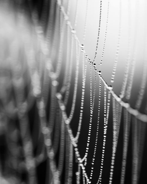 Spider-Web-6808-BW-Full