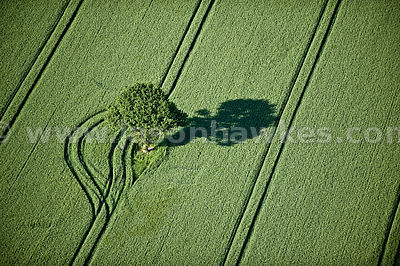 Fields near Long Marston, North Yorkshire