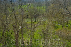View of Ohio Brush Creek at Great Serpent Mound