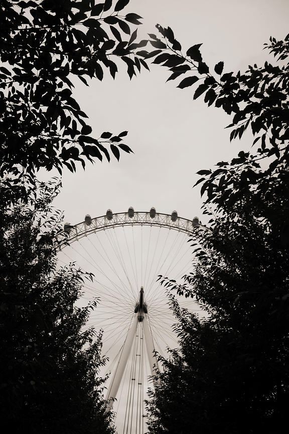 ferris wheel framed by trees