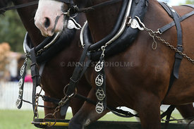 HOY_230314_clydesdales_3565