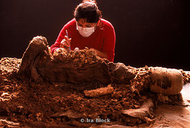 Cleaning a mummy