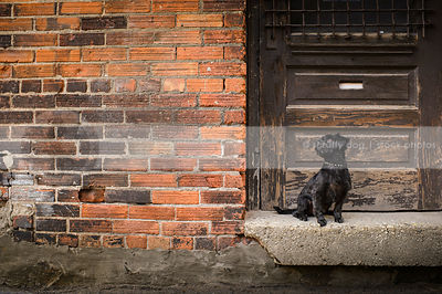 small groomed black dog sitting on doorstoop in brick alley
