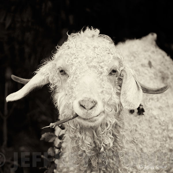 Jeffrey Stoner Photography | The Goats of Roan - Clint