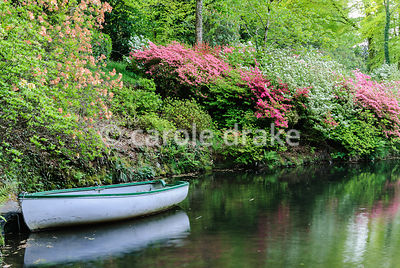 The lower pond with rowing boat, surrounded by lush azaleas. Lukesland, Harford, Ivybridge, Devon, UK