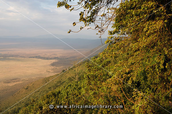 Heroes point, view from Ngorongoro crater rim to the crater floor, Ngorongoro Conservation Area, Tanzania