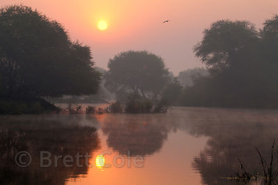 Misty sunrise in wetlands, Keoladeo National Park, Bharatpur, India